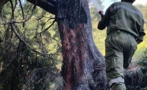 Waldbrand auf der Wandalm - Ginzling