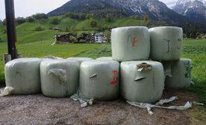 Vandalismus - mehrere Siloballen aufgeschlitzt - Wiesing