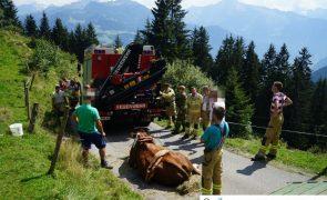 Tierischer Einsatz für die Feuerwehr auf der Zillertaler Höhenstraße